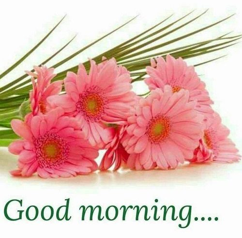 50 Good Morning Photo Download For Whatsapp Wallpaper Images Pics