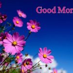 38+ Good Morning Flower images for free download HD pics