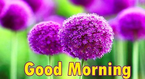 Amazing pics of Good Morning Flowers pic full HD wallpaper download photo