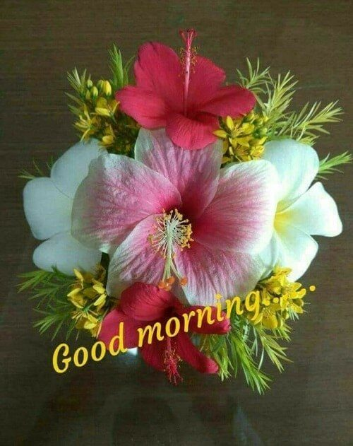 New images of Good Morning Flower picture wallpaper free download Rose pic HD to send rose online