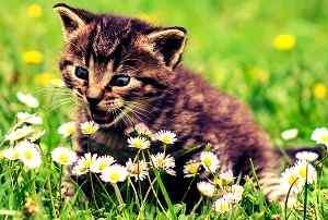 sweet cat baby image for Whatsapp DP