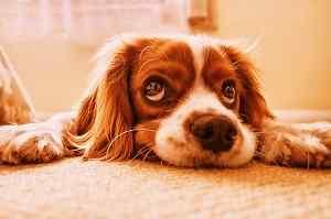 sweet puppy image of Whatsapp DP
