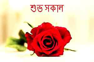 Good morning images for whatsapp free download in bengali